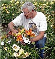 Ken McGann of Spring Fever Daylilies